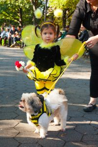 Pet Parade!